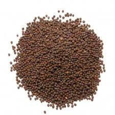 Mustard Seeds Exporter