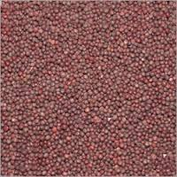 Mustard Seed Specification From India