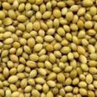 coriander seeds price