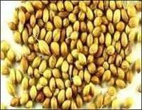 coriander seeds best price from india