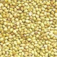 coriander seeds supplier