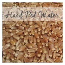 Durum Wheat Seeds