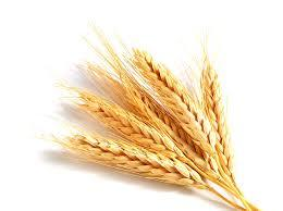 Wheat seeds prices