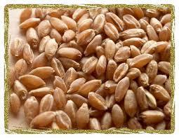 Wheat price