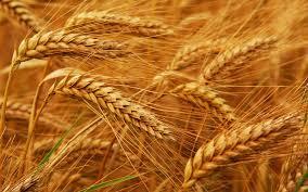 Wheat exporter