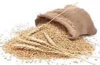 vital wheat gluten seed