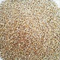 millet seeds best prices