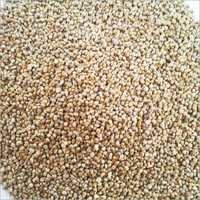 millet seed for sale