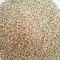 millet seed selling price