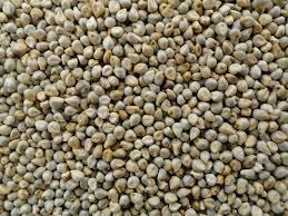 Millet seeds prices