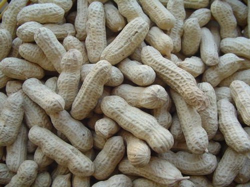 Java Peanut in Shell Count 24 28