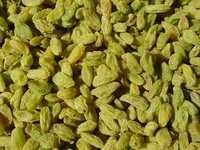 Raisins Green Good Average