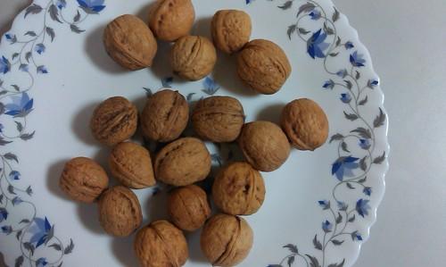 Walnut in Shell Size 28 mm