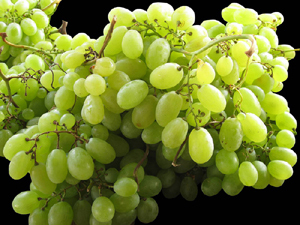 Indian Grapes Green