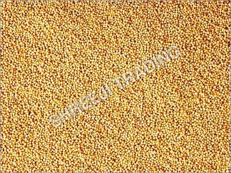 Yellow Mustard Seed