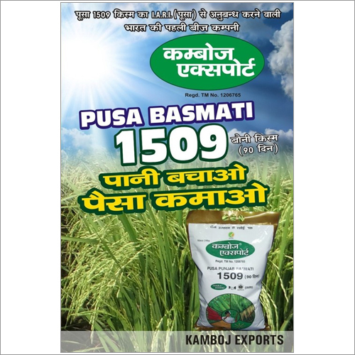 1509 Basmati Rice Seeds