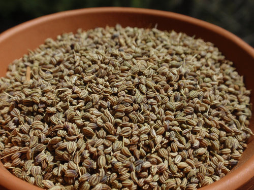 Bishop Seeds Machine Clean
