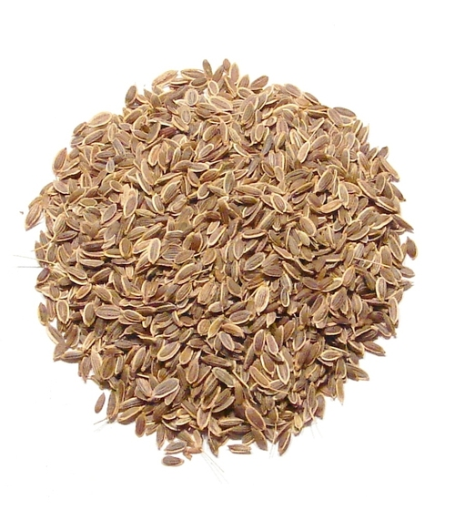 Dill Seeds Europe Quality