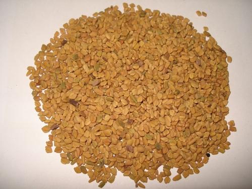 Fenugreek Seed Machine Clean Small Grain B Grade