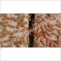 Termite Proof Compound