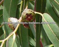 Eucalyptus Plant Extract