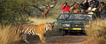 Tiger Land – Central India