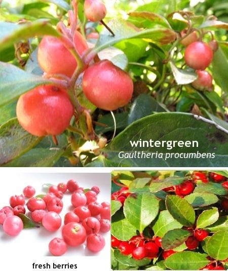 Wintergreen Oil