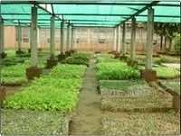 Tissue Cultivation Lab Construction