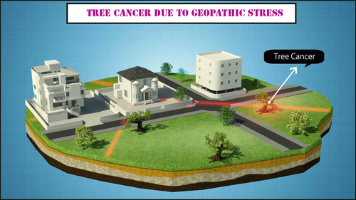 Effects of Geopathic lines passing under vegetation