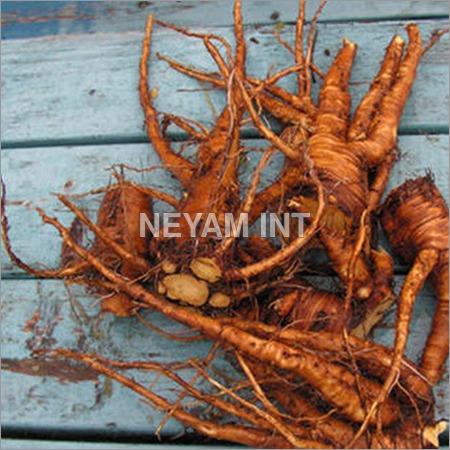 Coleus Roots