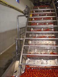 TOMATO PROCESSING PLANT & MACHINERY