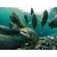 Aqua Feed Supplements
