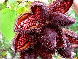 Annatto Extract Food Color