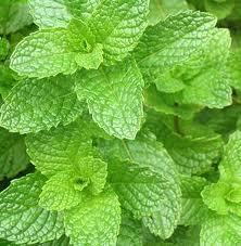 SPEARMINT OIL USP/BP