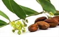 Natural Jojoba Oil Golden
