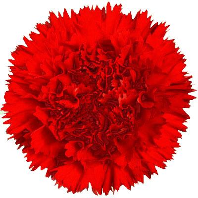 Amos Cut Flower