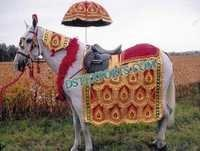 INDIAN VIVAH DECORATED HORSE COSTUMES