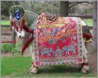 GUJRATI WEDDING HORSE DECORATIONS
