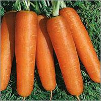 Nantes Carrot Seeds