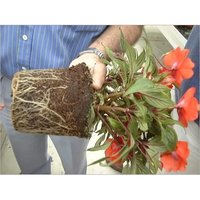Coir Pith Plant Roots
