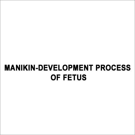 Manikin Development Fetus