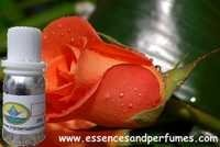 Musk Rose Fragrance Oil