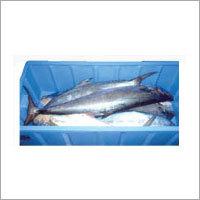Plastic Fish Crates