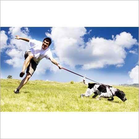 Dog Lead Coupler