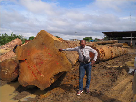 Bubinga Wood Slabs