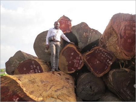 African Padauk Wood