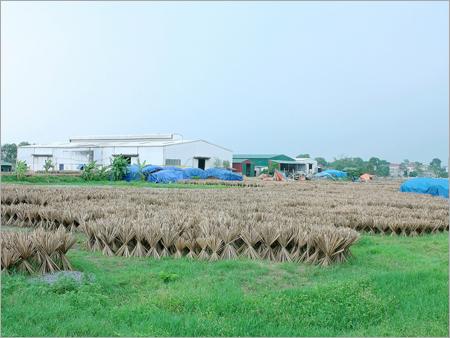 Raw Bamboo Sticks