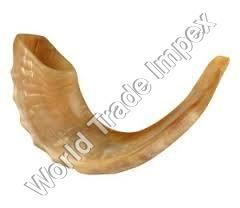 Polished Sheep Horn