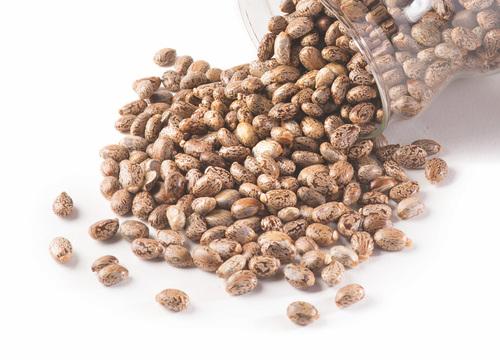 Caster Bean