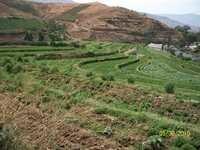 GERANIUM LAND